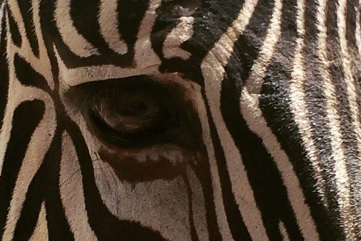 Leipzig: Zoo und Wildpark