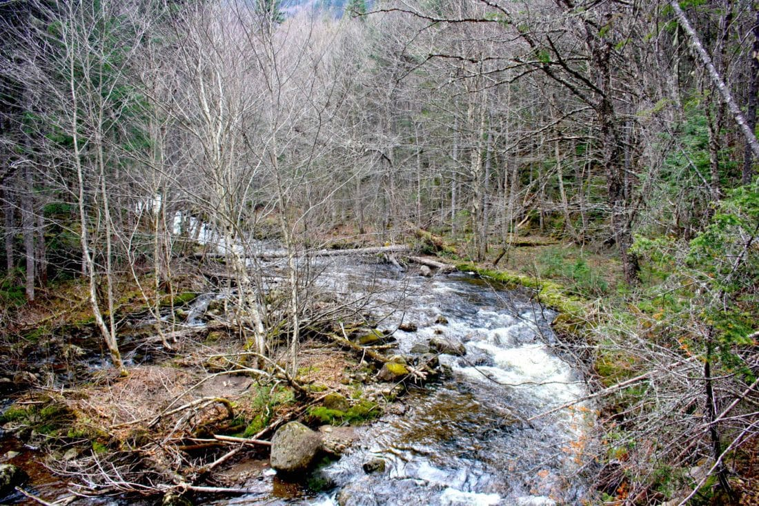 Ottawa Wald Wandern Fluss