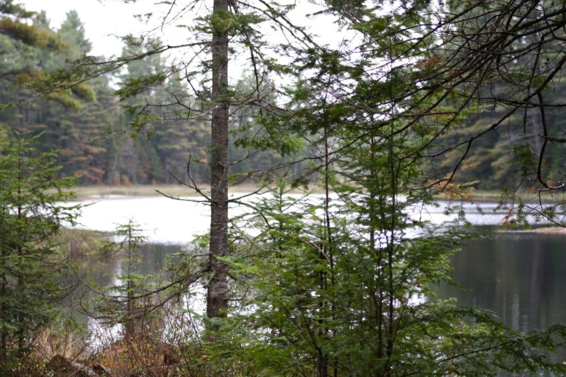 Ottawa Wald Wandern Tanne und See