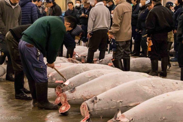 Fischmarkt in Tokio – Wenn der Wecker nachts um 2:00 Uhr klingelt
