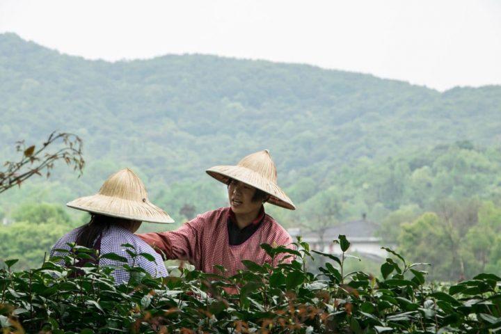 Hangzhou – drei Tage am Westlake
