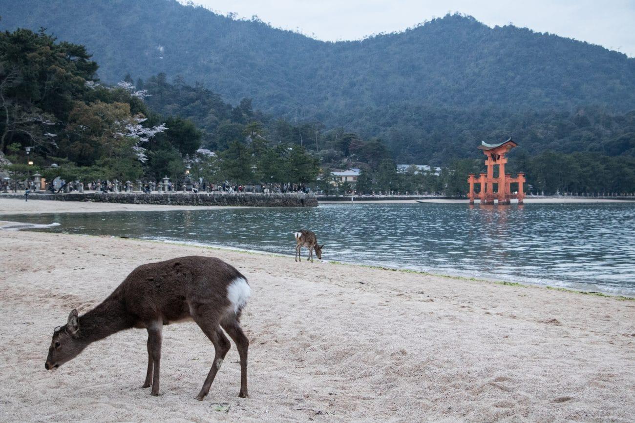 Japan Rundreise (Miyajima) Foto und Artikel von PASSENGER X