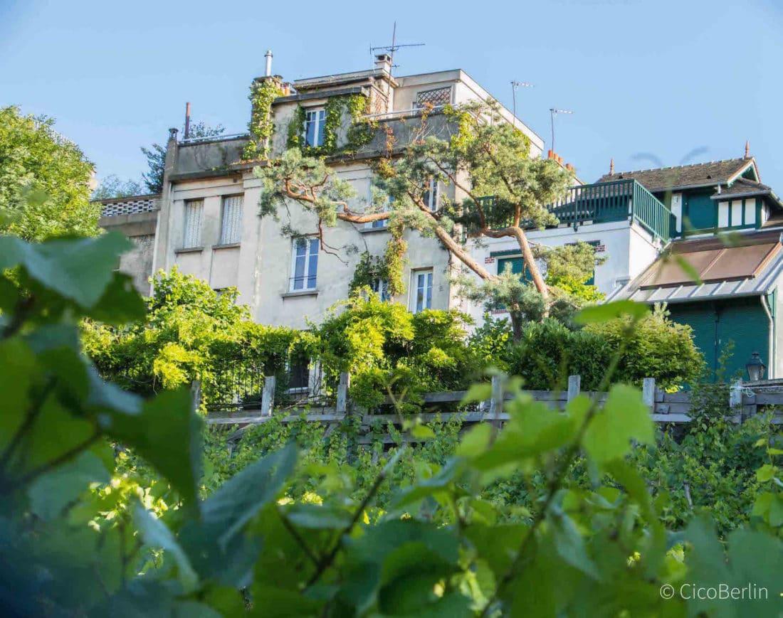 Städtereise Paris Tipps von CicoBerlin, Weinfeld in Montparnasse