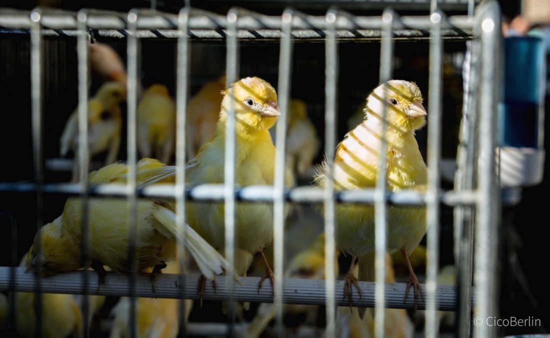 Städtereise Paris Tipps, Vogelmarkt
