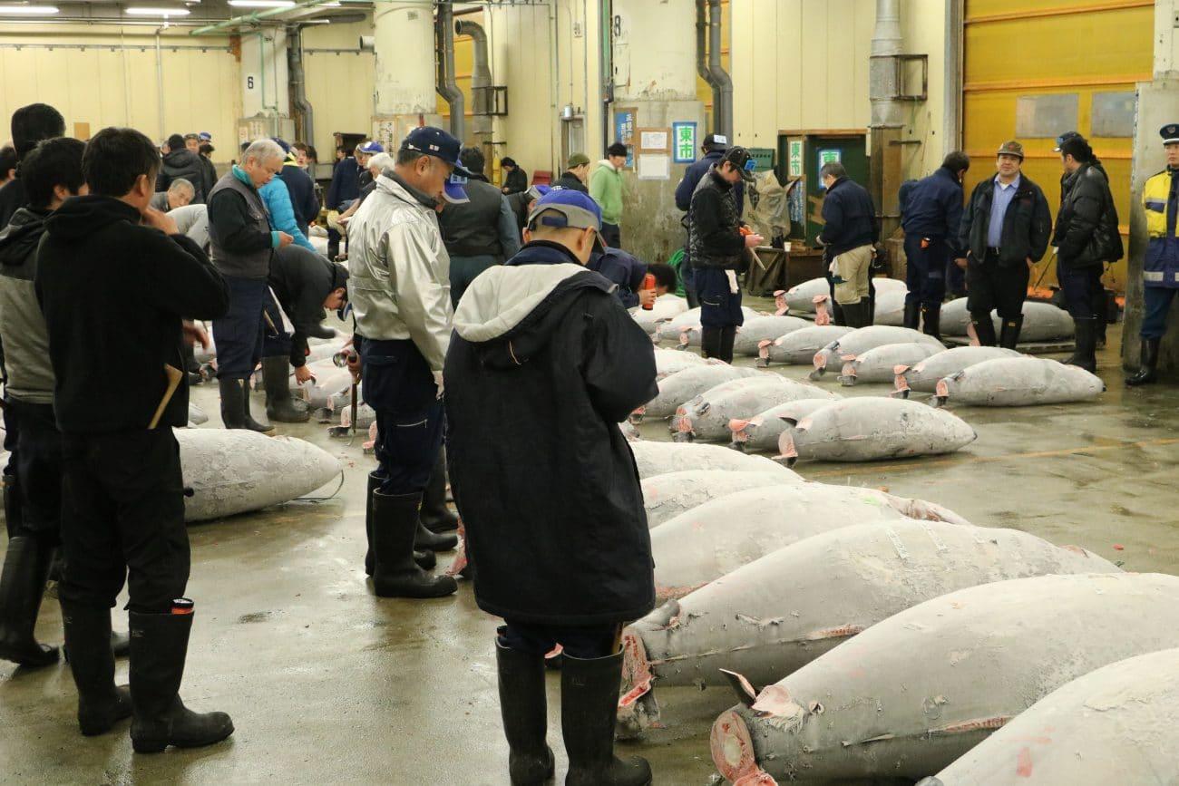 Die 10 Highlights Tokios, der Fischmarkt - von PASSENGER X