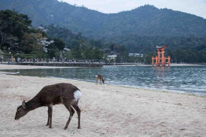 Ein Tag auf Miyajima – touristisch überlaufen, aber trotzdem schön