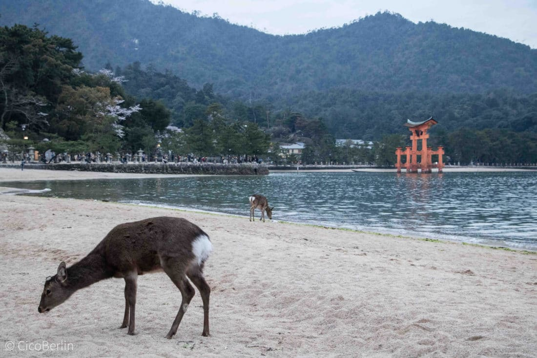 Ein Tag Miyajima, der Floating Shrine,