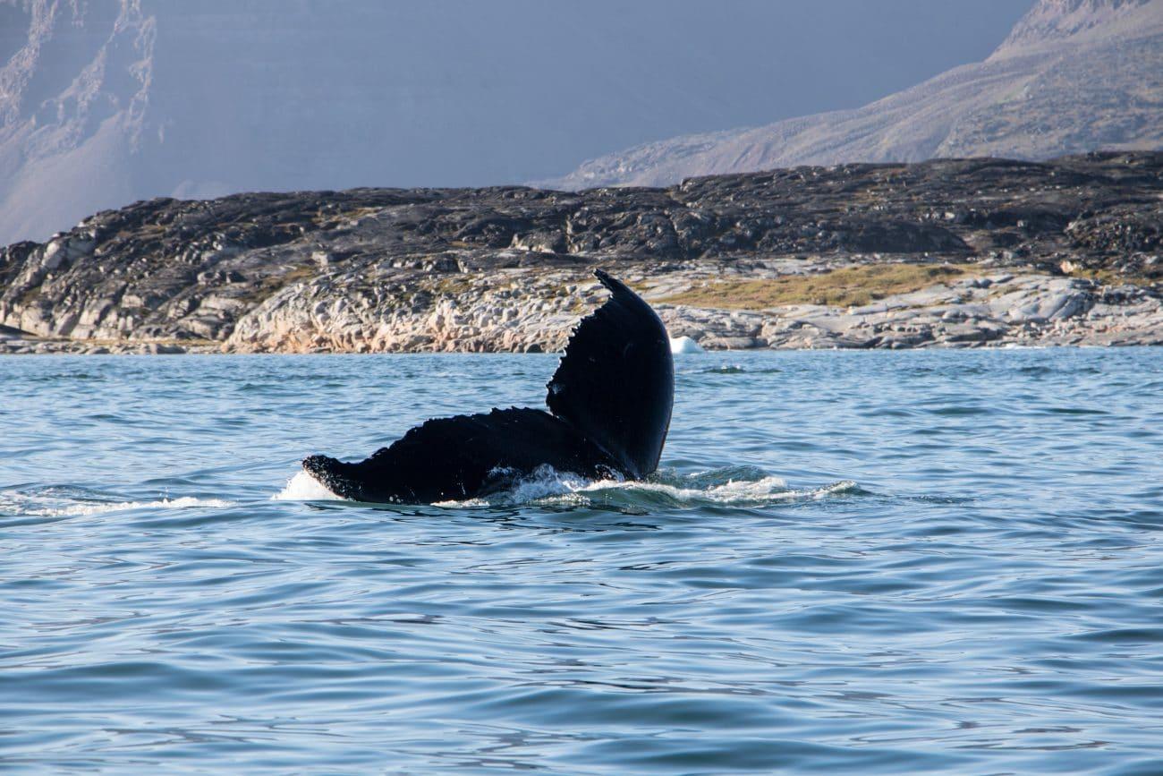 (Diskoinsel) Groenland selber buchen: Kosten und Route von PASSENGER X
