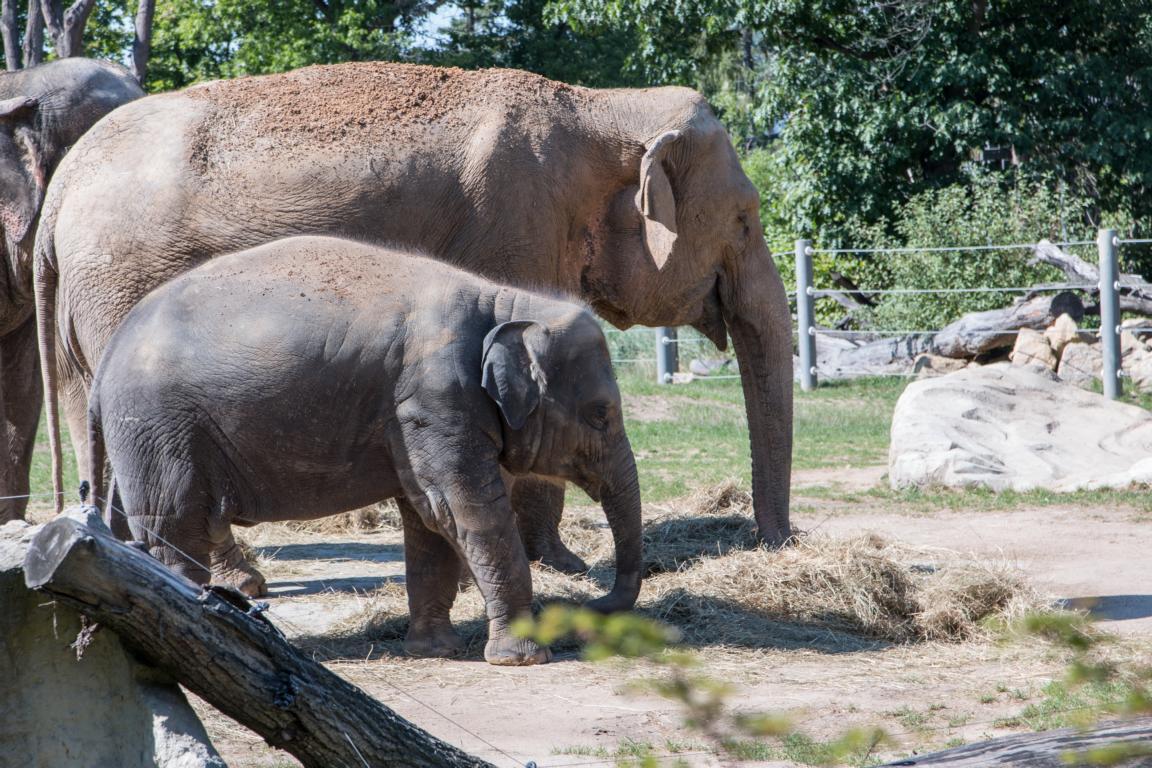 Prag Geheimtipps: Drei Bloggerinnen verraten ihre Highlights - Jessica von Yummytravel - Prager Zoo