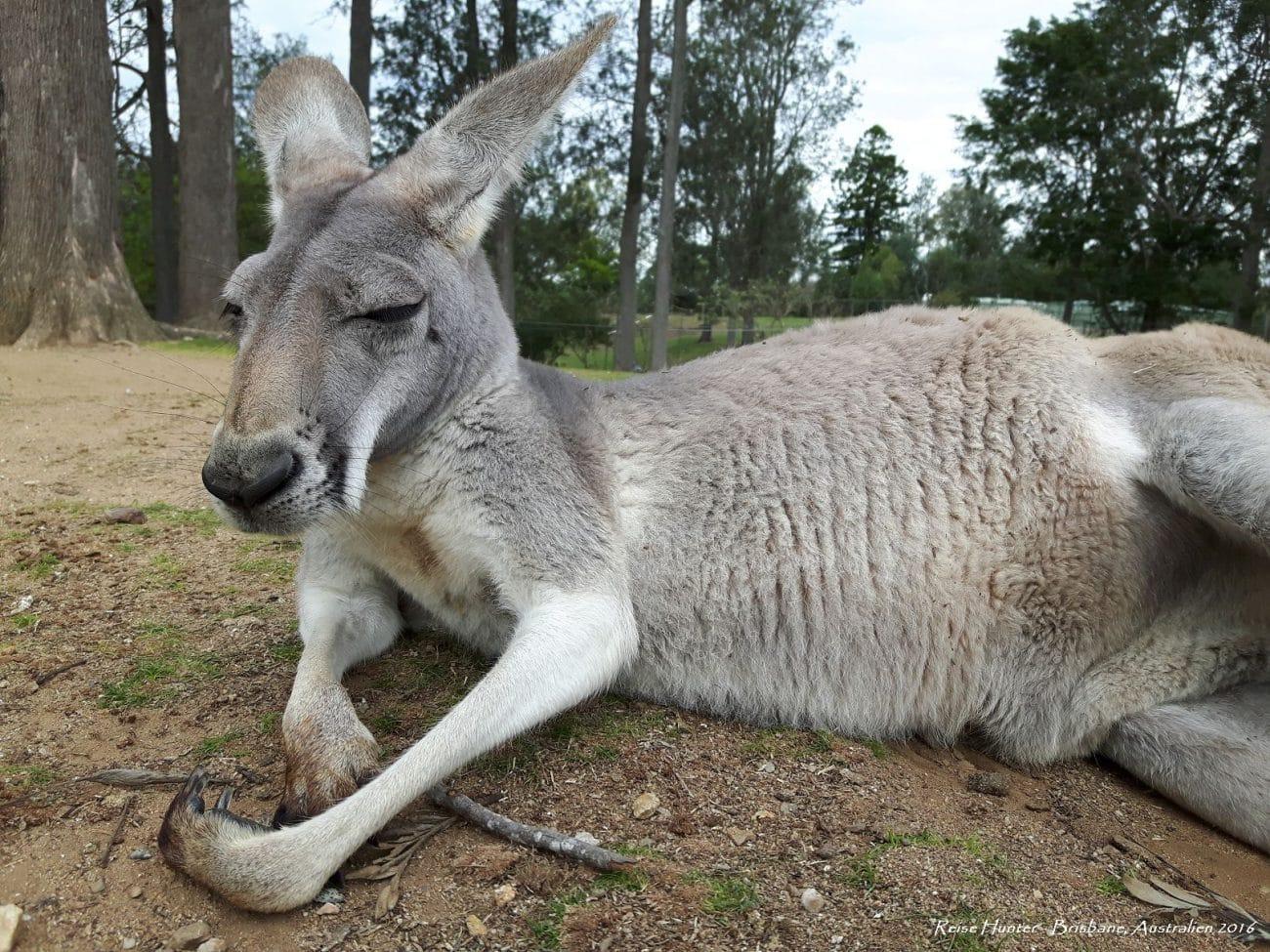 Sabbatical: Reise Hunter Australien 2016 erschienen auf PASSENGER X