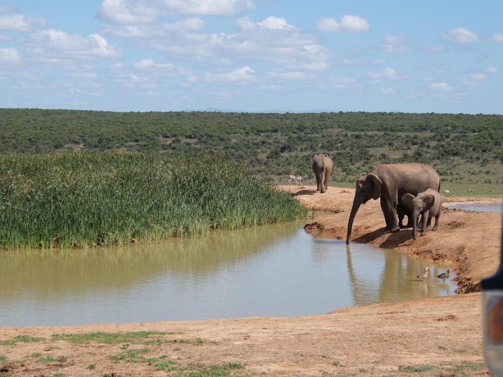 PASSENGER X Sabbatical Interview mit Sandra _Addo Nationalpark