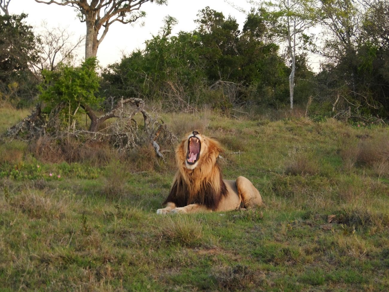 PASSENGER X Sabbatical Interview mit Sandra_Suedafrika_Schotia Game Reserve