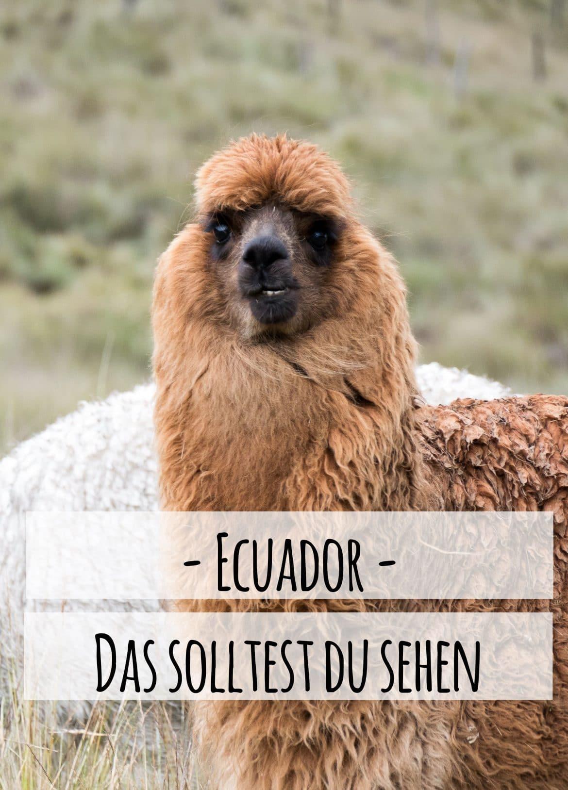 Ecuador Reise - hier kommen die Top Sehenswürdigkeiten, die du unbedingt in deine Reise einplanen solltest. Erschienen auf PASSENGER X