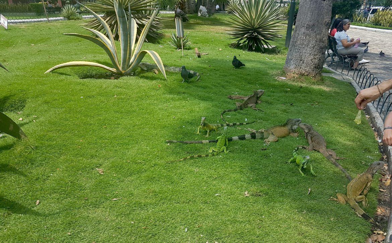 Ecuador Rundreise -Abflug von Guayaquil_Leguan Park
