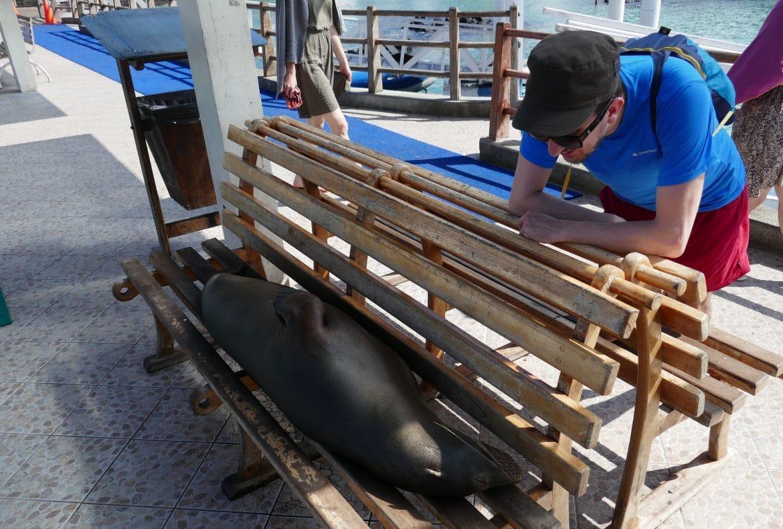 Ecuador Sehenswürdigkeiten Galapagos _Mein Freund der Seelöwe