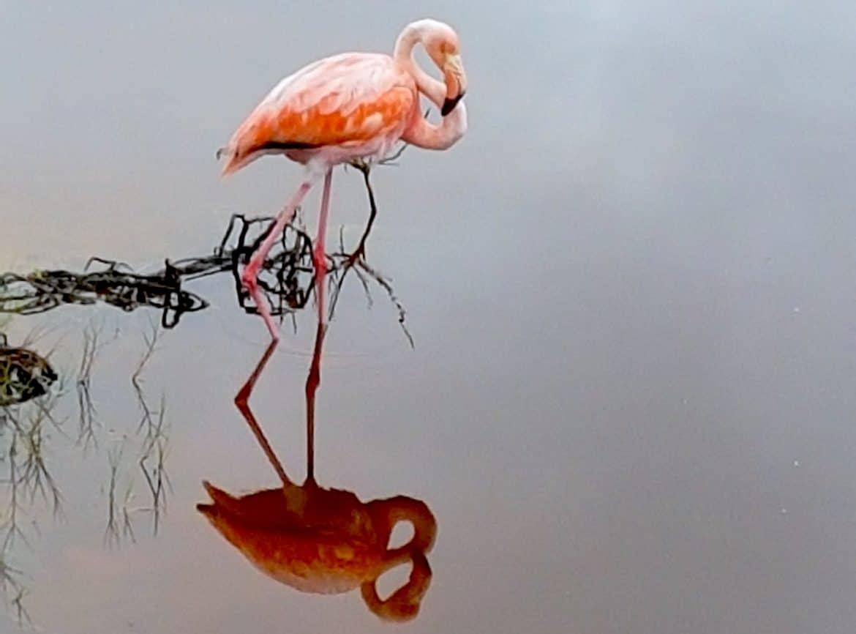 Sehenswürdigkeiten Ecuador Reise -Flamingo