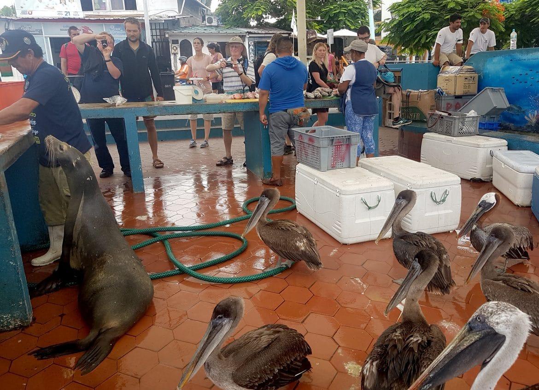 Sehenswuerdigkeiten Ecuador Reise_Fischmarkt - Grosser Andrang