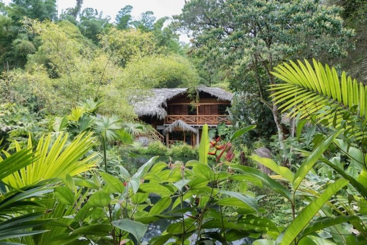 Ecuador: Warum ich den Nebelwald von Mindo so großartig finde