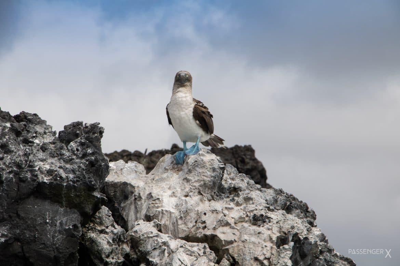 Eine Ecuador in 13 Fotos - PASSENGER X zeigt dir die schönsten Momente einer vierwöchigen Tour.