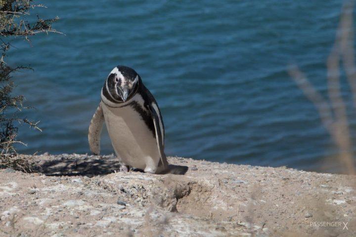 Vlog: Meine Wildlife Begegnungen in Patagonien