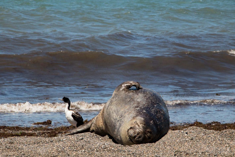 Meine schönsten Argentinien Fotos_Patagonien PASSENGER X