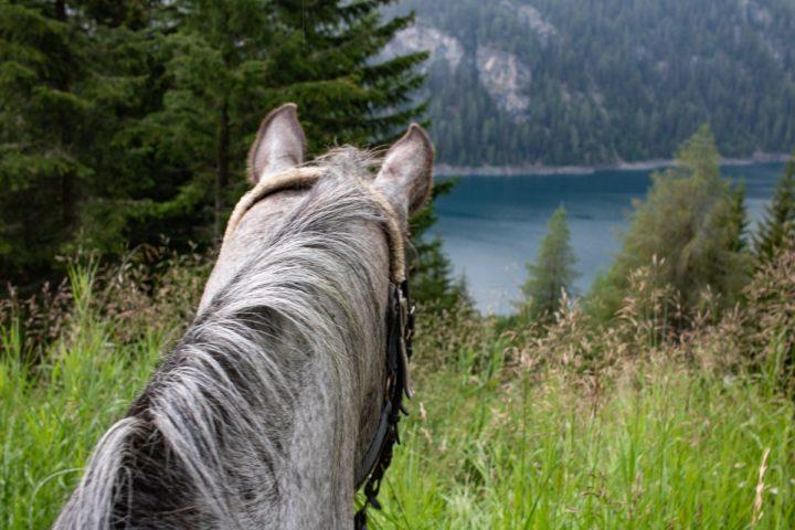 Sommerurlaub in der Schweiz: Idylle auf 1.769 Metern