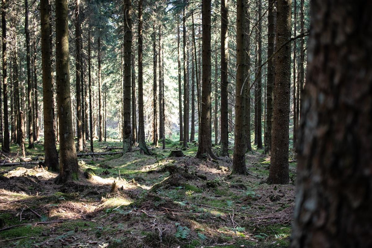 Wandern im Harz: So meistert man den Hexenstieg als Anfänger