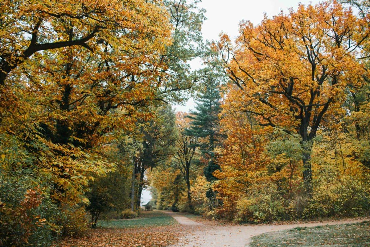 Anfahrt Pfaueninsel Berlin - ein Ausflug ins Grüne