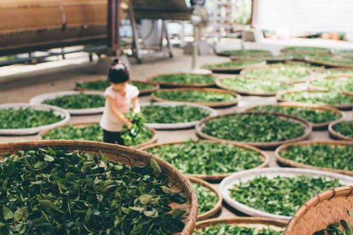 Sabbatical Interview: In 5 Monaten durch die asiatischen Küchen