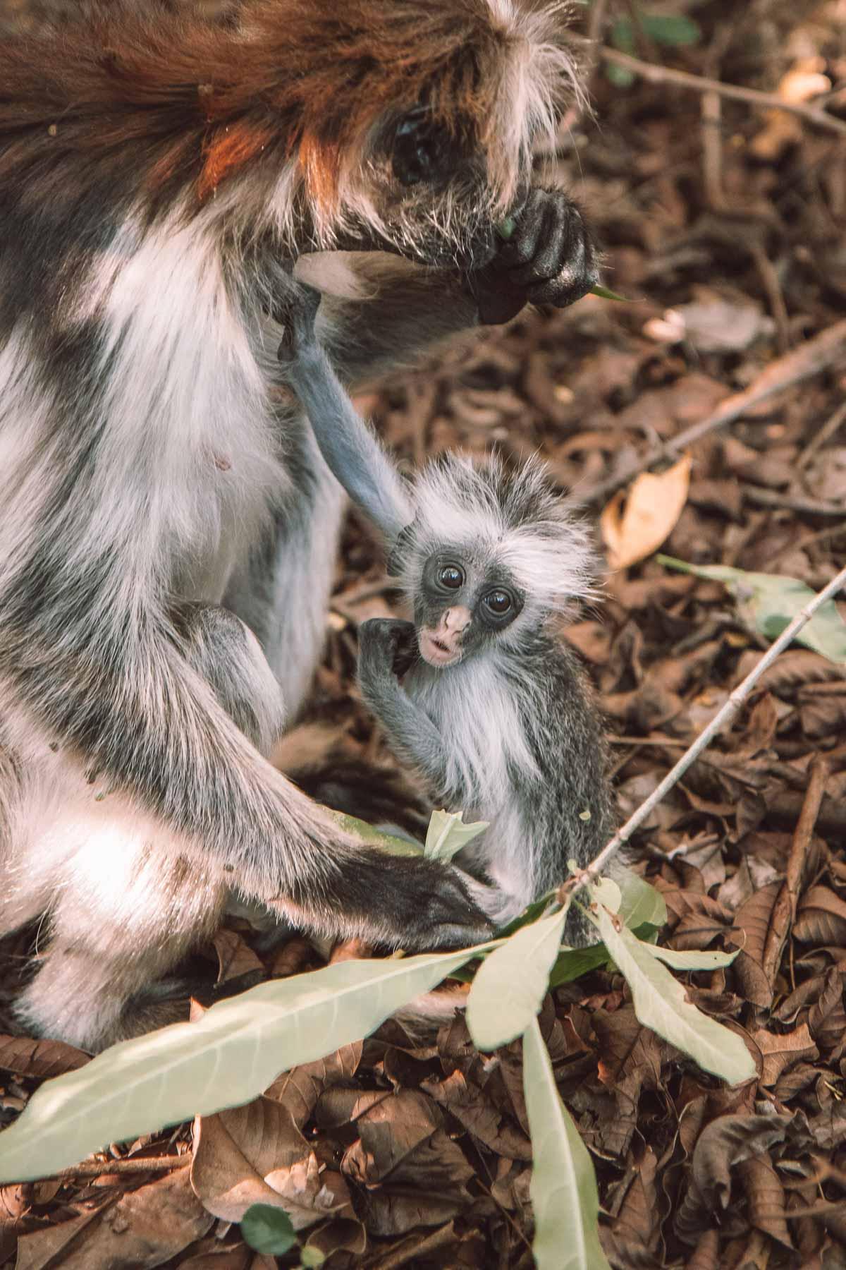 Affenwald Sansibar