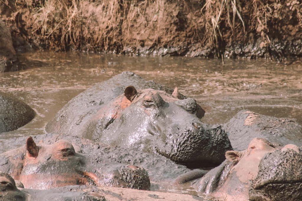 Tansania Nationalparks - Tansania Safari Tipps von PASSENGER X