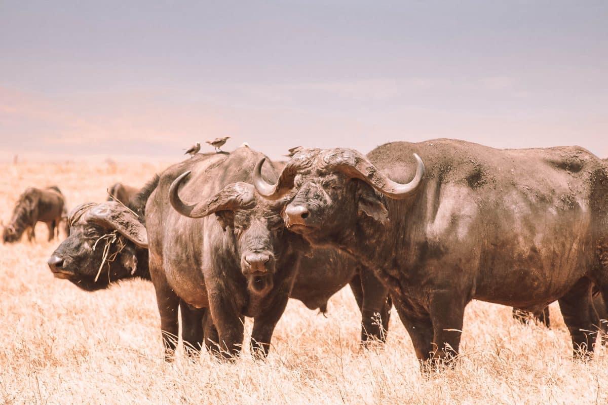 Tansania Nationalpark Serengeti - Reisebloggerin PASSENGER X verrät wie du die Reise am besten buchst