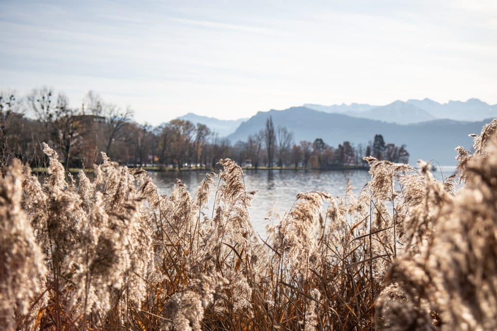 Spazieren am Vierwaldstätter See - Einer von 9 Luzern Reise Tipps auf PASSENGER X: