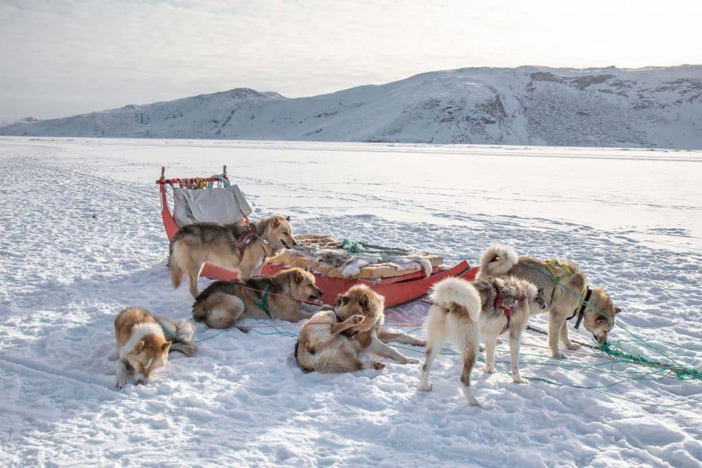 Winterabenteuer in Grönland / Kangerlussuaq - eine Hundeschlittentour über das ewige Eis (Bericht von PASSENGER X)