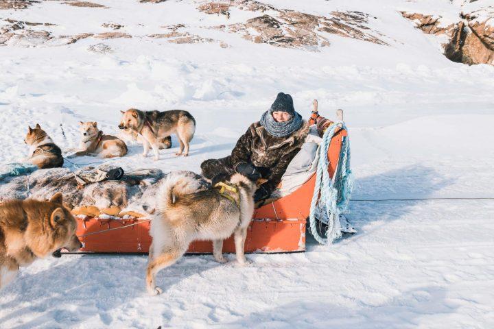 Mit 15 Hundestärken über das grönländische Eis