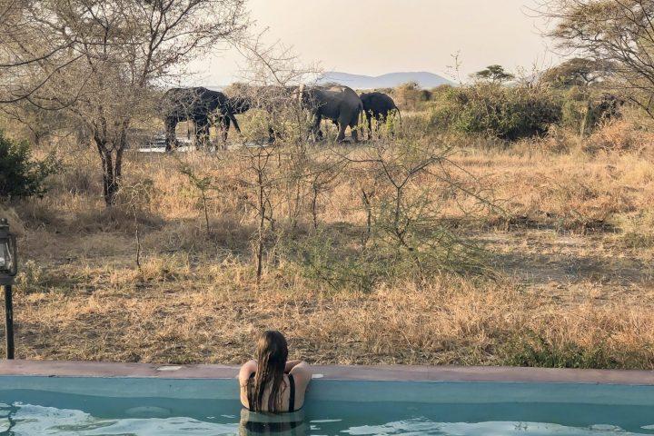 Safari im Tarangire Nationalpark – besser hätte unser Auftakt nicht sein können!