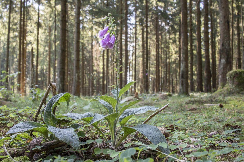 Harz Sehenswürdigkeiten