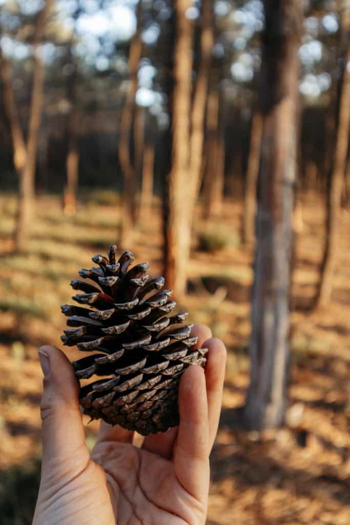 Mitten im Kiefernwald Wildcampen in Portugal