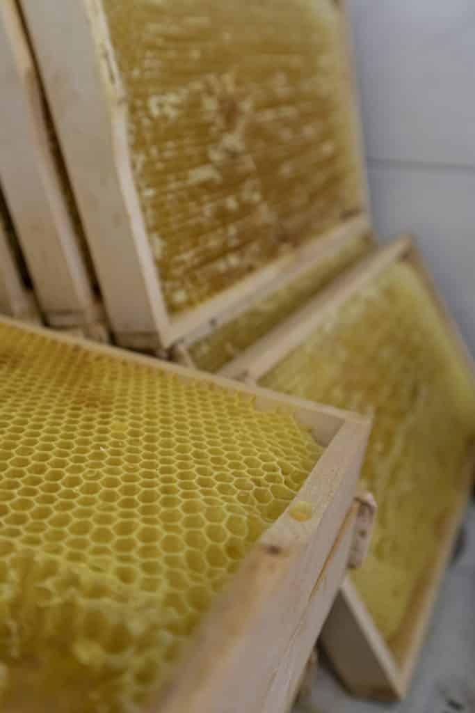 Honig ernten_Biohof Casutt in Tenna_Urlaub im Safiental