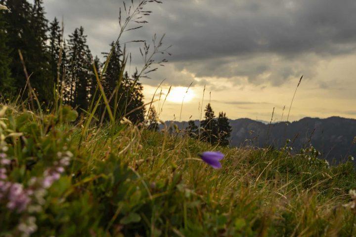 Urlaub in der Schweiz: Tipps für das wunderschöne Safiental