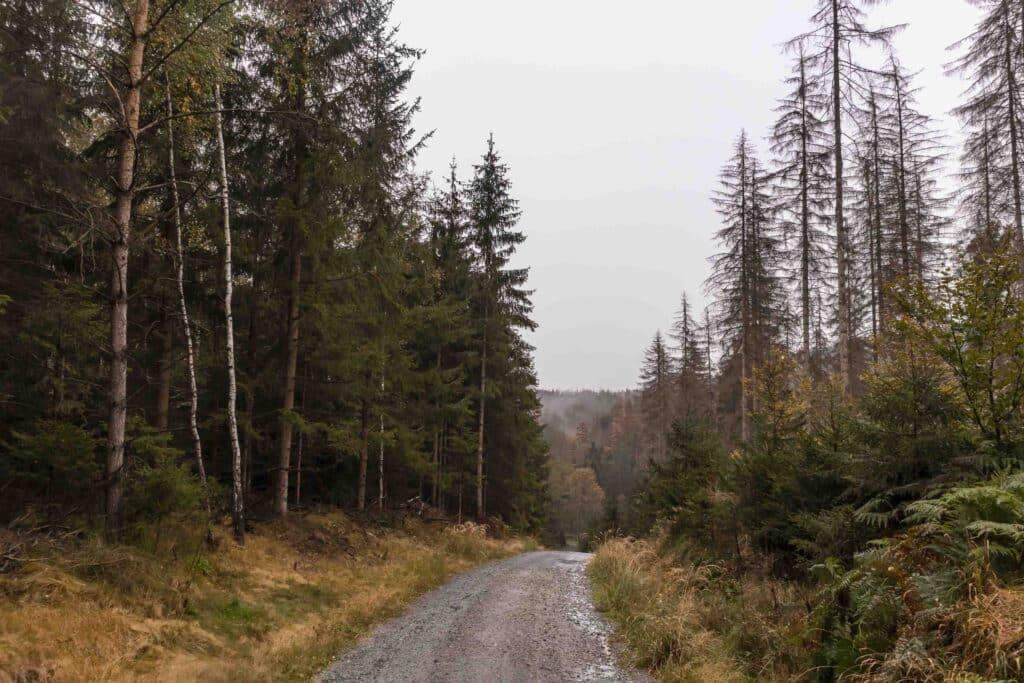 Wandern im Elbsandsteingebirge: unterwegs auf dem Malerweg im Herbst_Sächsische Schweiz_PASSENGER X