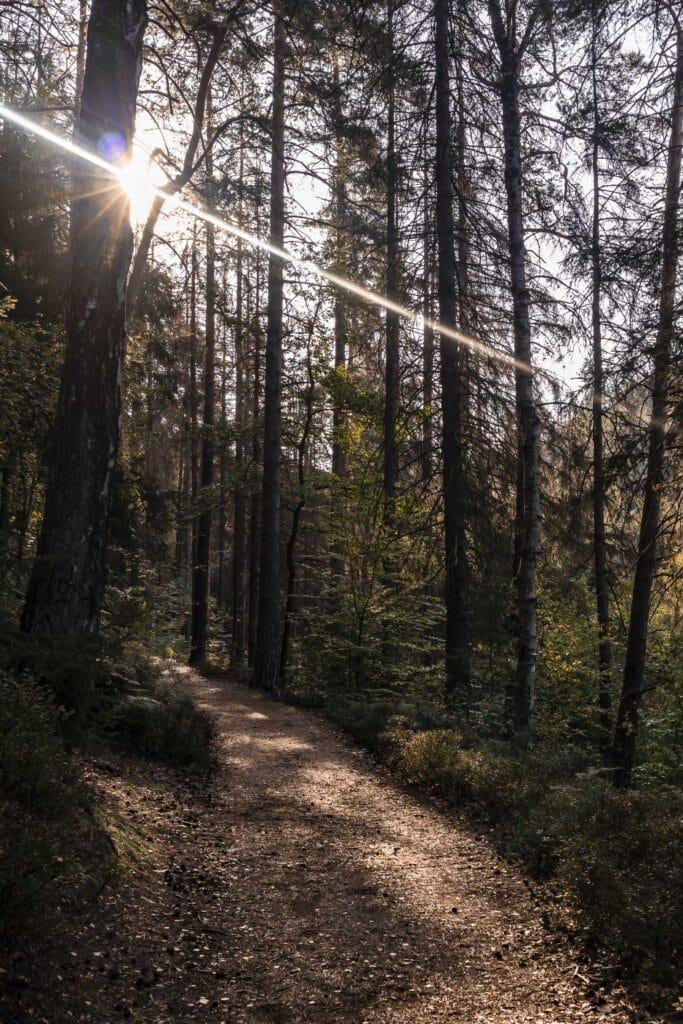 Wandern im Elbsandsteingebirge: unterwegs auf dem Malerweg_PASSENGER X