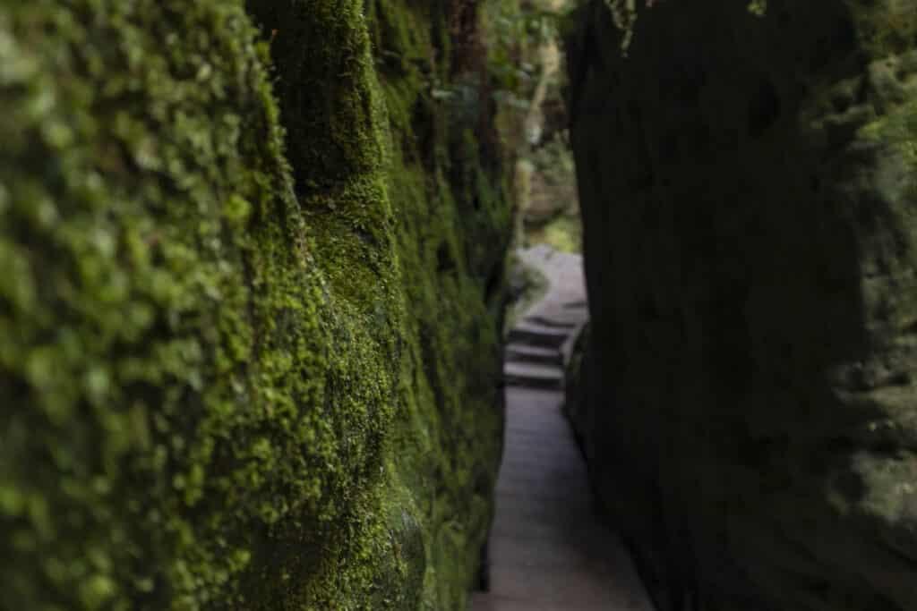 Wandern im Elbsandsteingebirge: unterwegs auf dem Malerweg Schwedenlöcher_PASSENGER X