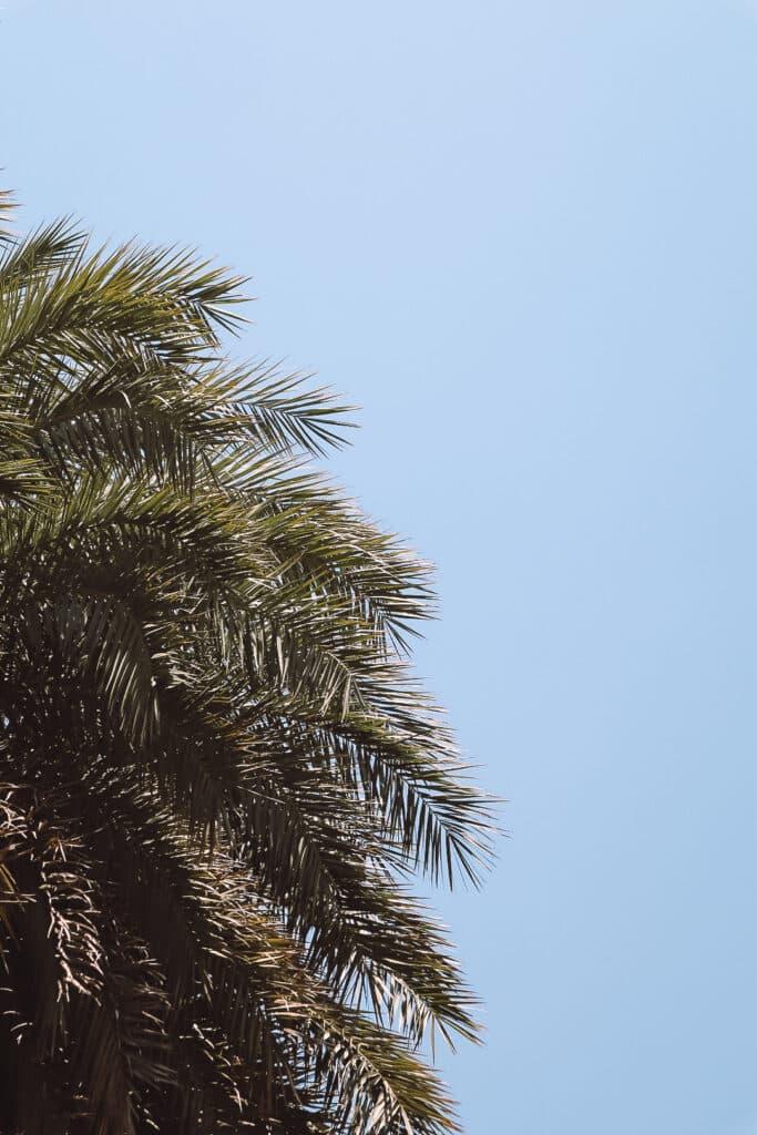 Palmenstrand von Prevli_PASSENGER X