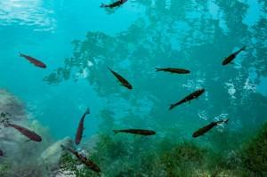 Die besten Tipps für den  Nationalpark Plitvicer See in Kroatien von PASSENGER X