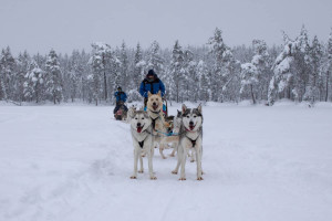 Winter Urlaub Lappland Finnland - Nordlichter, Huskytour und Wandern