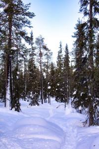 Lappland Finnland Winter Urlaub- Nordlichter, Huskytour und Rentiertour