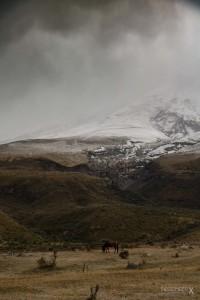Ecuador - im Nationalpark Cotopaxi