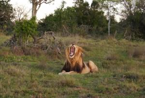 PASSENGER X Sabbatical Interview mit Sandra Suedafrika Schotia Game Reserve