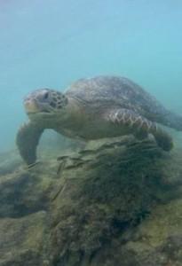 Sehenswürdigkeiten Ecuador Rundreise_Isabella Galapagos_Schnorcheln
